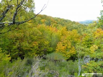 Hayedo de Tejera Negra;goriz club alpino madrileño cueva de los enebralejos valle del silencio leon